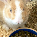 Meet The Animals - Ginger the Rabbit - Our very friendly male rabbit is a mixed breed that joined the team in July 2020.