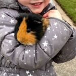 Meet the Animals - Pixel the Guinea Pig - A member of the rodent family that is often kept as a pet.